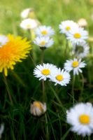 daisies and daffodils. by LubelleCreativeSpark