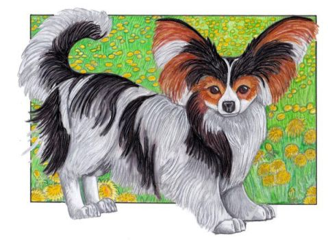 Papillon Puppy by lemurkat