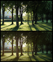 Photo3: Trees Before and After by Pstrnil