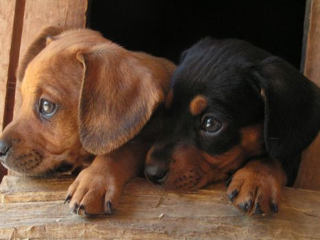 Little dogs by D.D. by Mojito24