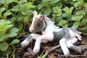 Black and White Foal by AleciaEdwards