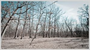 Cold Winter Woods by TimoKreations