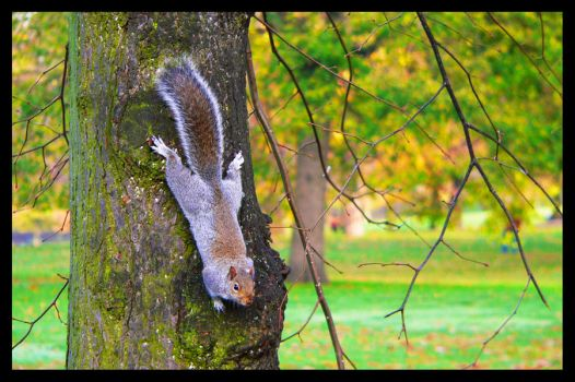Squirell by Lizzy0305