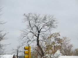 10/25/12 Tree in the City by liha-irden