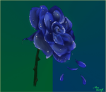Random Drawings I Did for People | Kyra's Rose (2) by GoldenBlackHawk