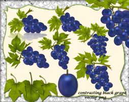 Contrasting Black Grape by roula33