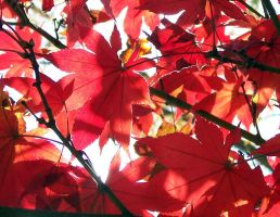 Red Fall 2 by janus002