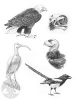 Animal Anatomy sketches - 2 by KatieHofgard