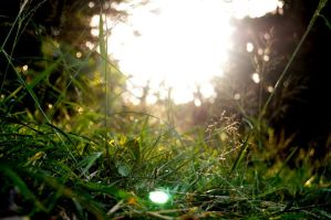 Sunset in the grass by ThomasLMC