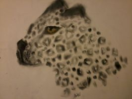 Snow Leopard Head-Pastel by DelJakar