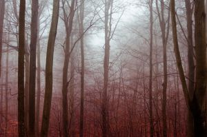 Foggy Forest by SuNudel