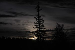 Kaibab Forest Moonrise by DoomWillFindYou