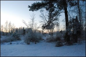December Afternoon VI by Eirian-stock