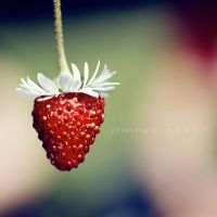 Flying Strawberry. by TinaApple