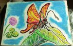 Oil Pastels: Moth by kxeron
