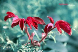 Redleaves by Milky0303