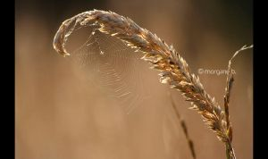Web by moem-photography