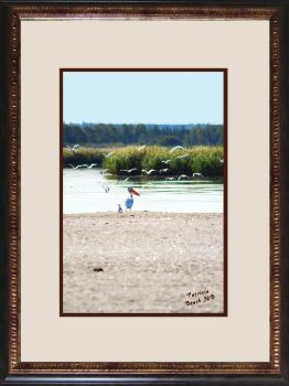 Virtual Framed Pelican by Joe-Lynn-Design