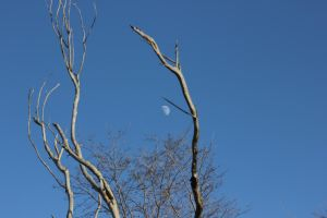 Moon Behind the Trees by geiersphotos