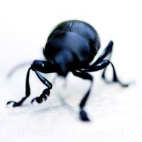 beetle's dance by prismes