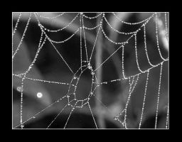 SPiDERWEB by candyflesh