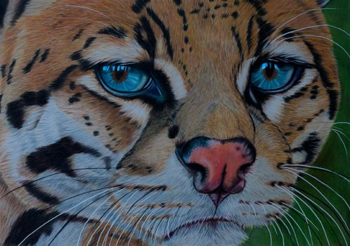 Ocelot by Sarahharas07