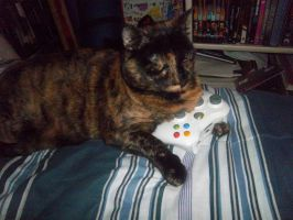 My Baby Playing Assassin's Creed by ColourLuver