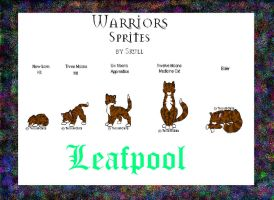 Leafpool from Warriors by pandadragon13