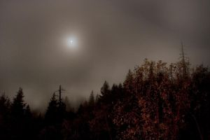 Red Woods - Night Time by Elijah-Snow