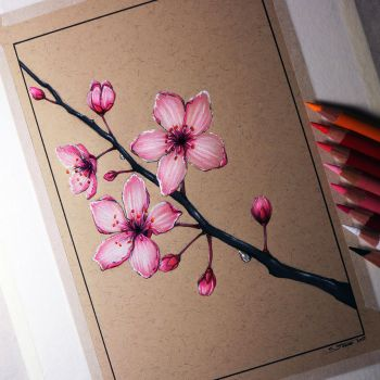Cherry Blossom Drawing by LethalChris