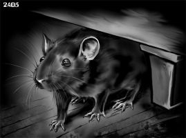 The rat is afraid by Candra