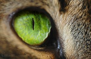 Cat's eye by grugster