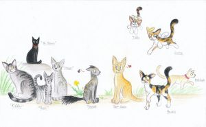 Cats and Cats and Cats by EleanorTopsie