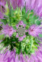 Thistle View by fractal1