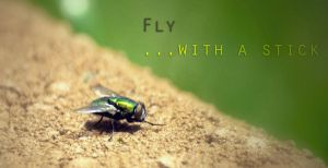 Fly...with a steek by ksouth