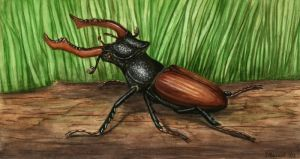 Stag Beetle by jfapeacock