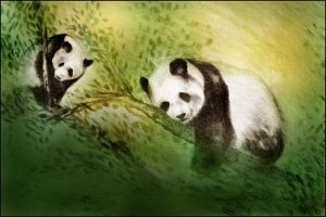 Lazy pandas by raakkel