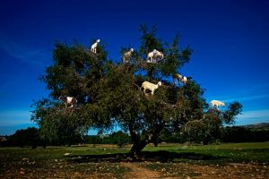 The Tree House by gilad