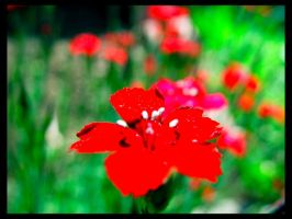 The Red Flower by deadward1555