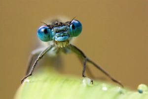 Big Blue eyes by AngiWallace