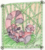 Red Panda in a Bamboo Forest by chikajin