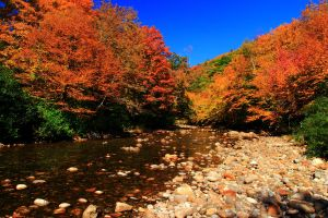 Stock: Mountain River in Autumn by Celem