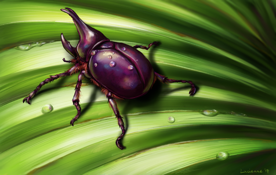 Rhino beetle by Bojeva
