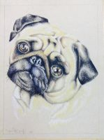PUG!! by allonss