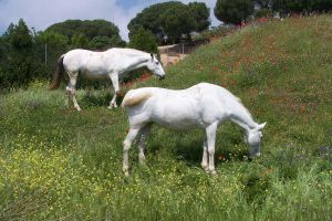 White peaceful beasts by Ferkvin