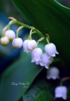 Lily of the Valley by ELaiNes-DarkRoom