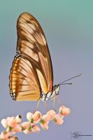 Butterfly by ColinHuttonPhoto