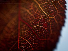 Veins of Autumn by Suinaliath