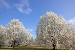 March Trees by deseonocturno