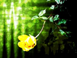 Yellow Rose Wallpaper by ElrithRydrine